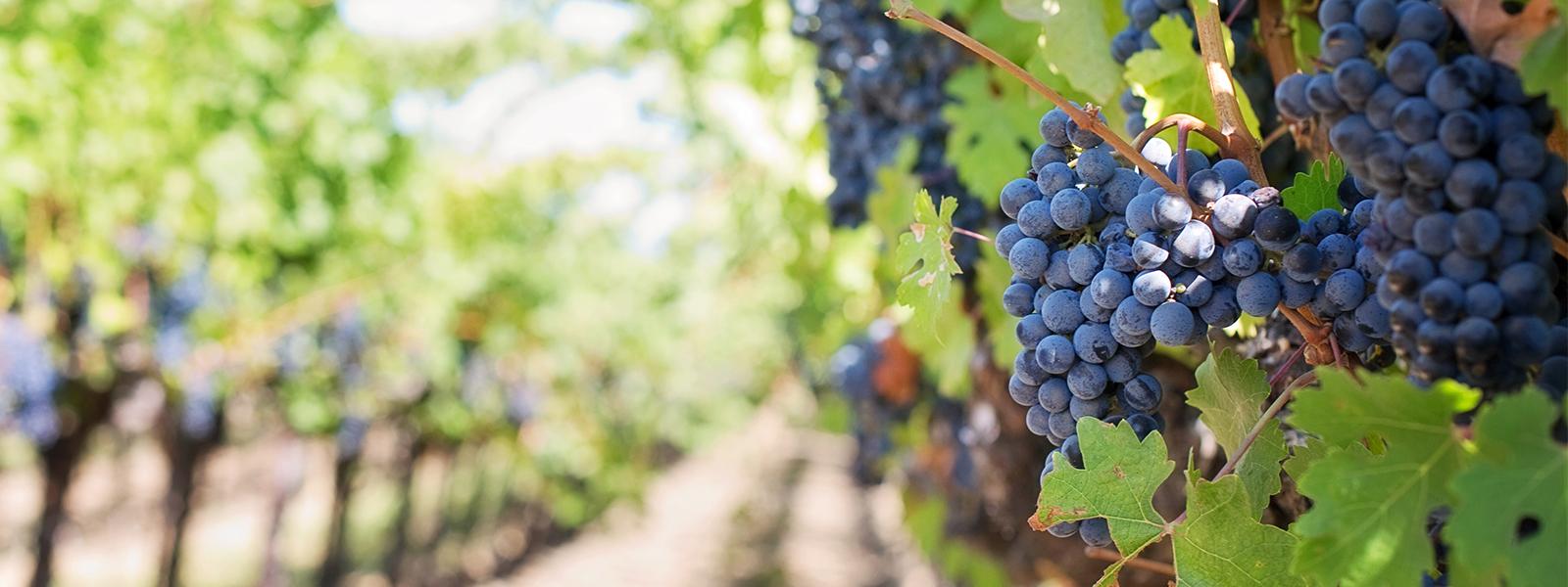 Vino sin alcohol surgió de un programa corporativo
